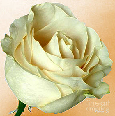 Art Print featuring the photograph White Rose On Sepia by Nina Silver