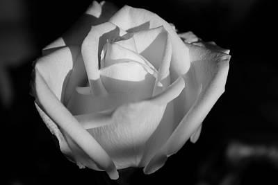 Dennis Miller Wall Art - Photograph - White Rose by Richard Dennis Miller
