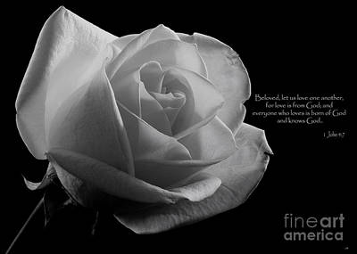 Photograph - White Rose by Sandra Clark