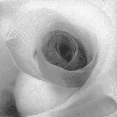Painting - White Rose by Tony Rubino