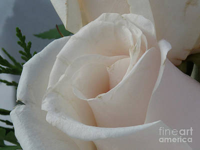 Photograph - White Roses by Deborah Smolinske