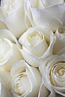 Dew Photograph - White Roses by Garry Gay