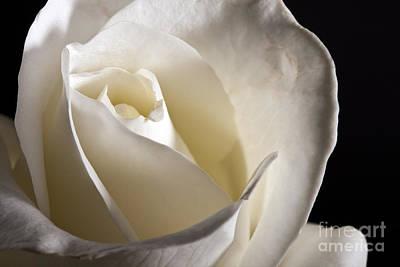 Photograph - White Roses by Gunnar Orn Arnason