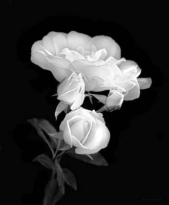 Photograph - White Roses In The Moonlight Black And White by Jennie Marie Schell