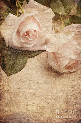 Roses Royalty-Free and Rights-Managed Images - White Roses by Jelena Jovanovic