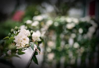 Medium Format Film Digital Art - White Roses by Linda Unger