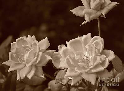 Photograph - White Roses On Beige by Bob Sample