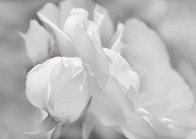Photograph - White Roses Soft Gray  by Jennie Marie Schell