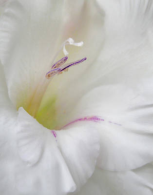 Photograph - White Ruffles by David and Carol Kelly