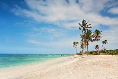 Nevis Photograph - White Sand And Palm Trees On A Caribbean Beach by Katherine Gendreau