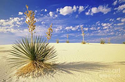 White Sand Blue Sky New Mexico Print by Bob Christopher