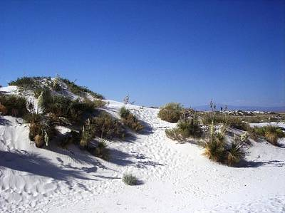 Photograph - White Sands Foilage by The GYPSY And DEBBIE