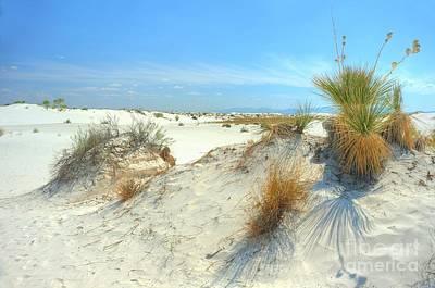 White Sands Foliage Art Print by John Kelly