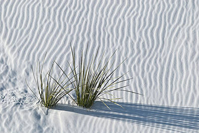 White Sands Grasses Original