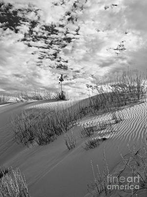 Photograph - White Sands Iv by Craig Pearson