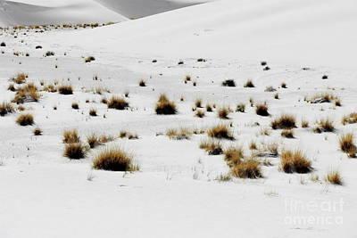 White Sands Life Art Print