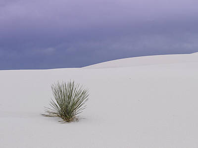 Photograph - White Sands Lone Yucca by Jean Noren