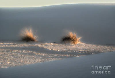 Photograph - White Sands New Mexico Dune by Gregory Dyer