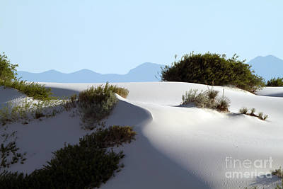 Photograph - White Sands Sculpture by Martha Marks