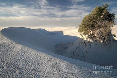 Photograph - White Sands Self Preservation by Adam Jewell