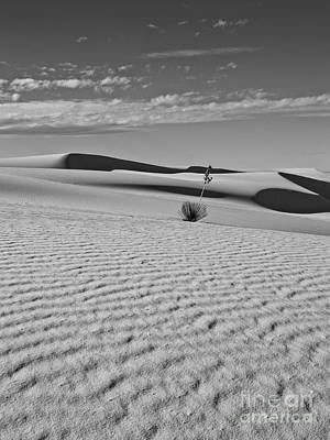 Photograph - White Sands V by Craig Pearson