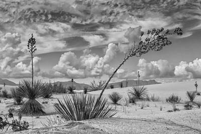 Photograph - White Sands New Mexico by Sandra Selle Rodriguez