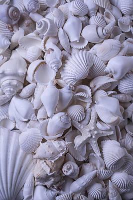 White Sea Shells Art Print by Garry Gay