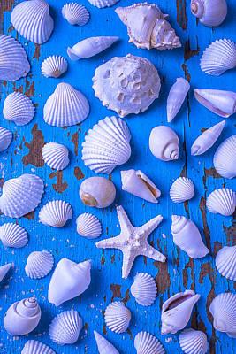 White Sea Shells On Blue Board Art Print by Garry Gay