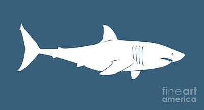 Royalty-Free and Rights-Managed Images - White Shark by Amy Kirkpatrick