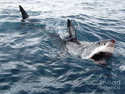 Rodney Fox Photograph - White Shark Looking For Bait by Crystal Beckmann