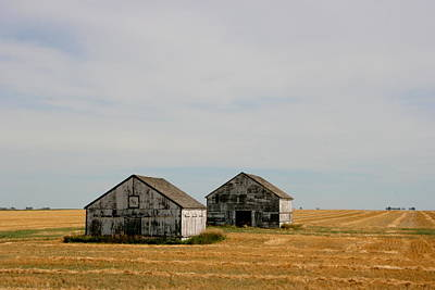 Photograph - White Sheds by Betty-Anne McDonald