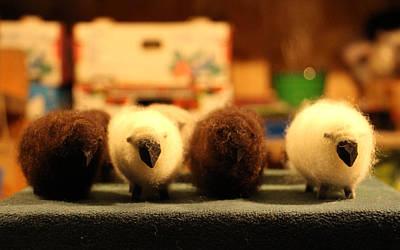 Photograph - White Sheep Brown Sheep by Ankeeta Bansal