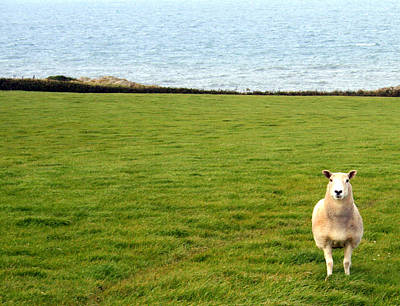 Photograph - White Sheep In A Green Field By The Sea by Georgia Fowler