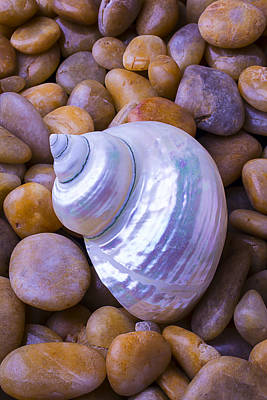 Solid Photograph - White Snail Shell by Garry Gay
