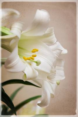 White Softness Art Print