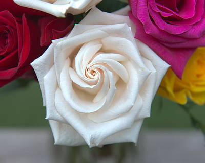 Hager Wall Art - Photograph - White Spiral Rose by Greg Hager