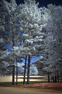 Photograph - White Splendor by Randall Nyhof