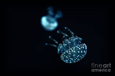 Photograph - White Spotted Jellyfish by Charline Xia