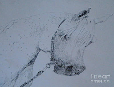 White Stallion Art Print by Patries Van Dokkum