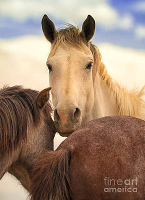 Photograph - White Stallion Wild Horses On Navajo Indian Reservation  by Jerry Cowart