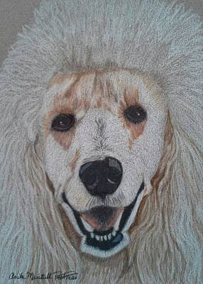 Drawing - White Standard Poodle by Anita Putman