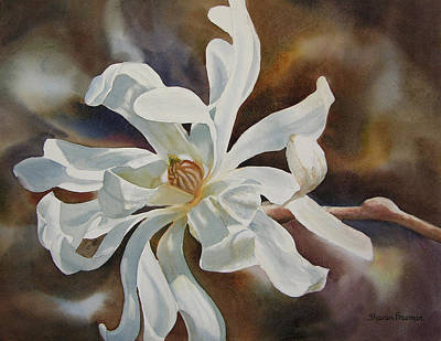 Magnolia Painting - White Star Magnolia Blossom by Sharon Freeman