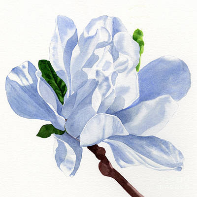 White Star Magnolia Blossom White Background Square Design Art Print by Sharon Freeman