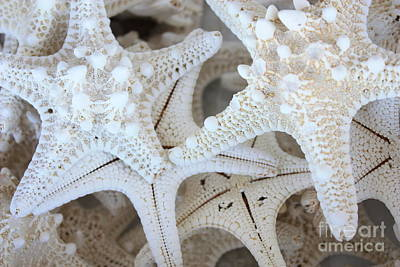 Abstract Royalty-Free and Rights-Managed Images - White Starfish by Carol Groenen