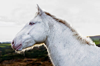 Photograph - White Steed by E j Carr