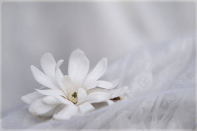 Photograph - White by Stephanie Hollingsworth