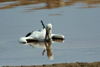 Stork Wall Art - Photograph - White Stork Drowning In The Dead Sea by Photostock-israel/science Photo Library