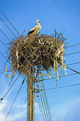 Photograph - white storks of Pontolivado by Meirion Matthias