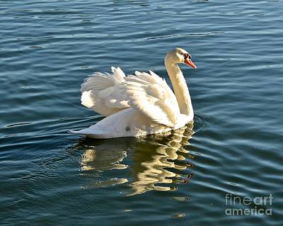 Photograph - White Swan At Sunset by Carol  Bradley
