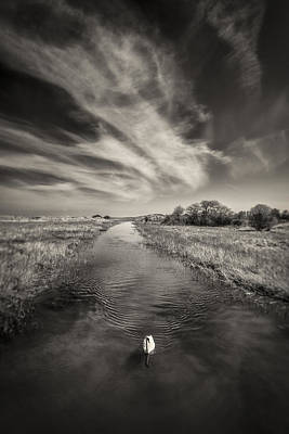 Sepia Photograph - White Swan by Dave Bowman